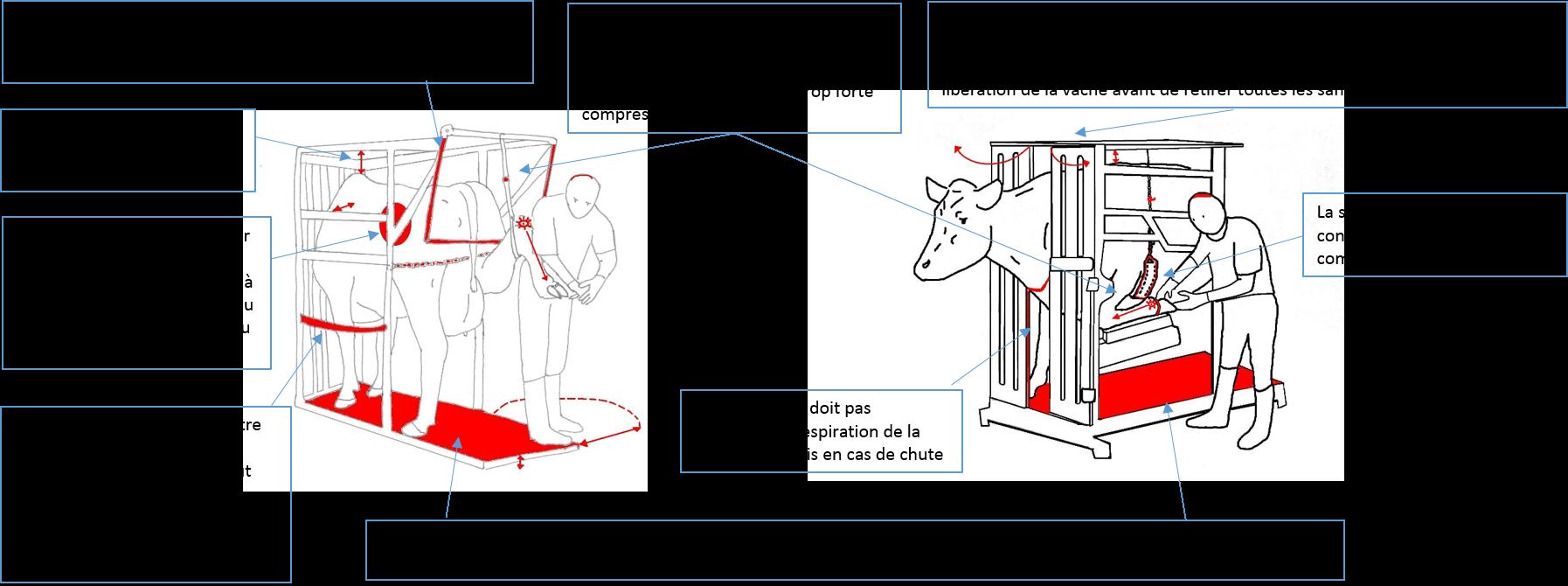Avec cage - securite animal (I. Delaunay)