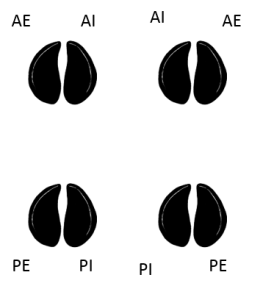 onglons-anterieurs-posterieurs-externes-internes