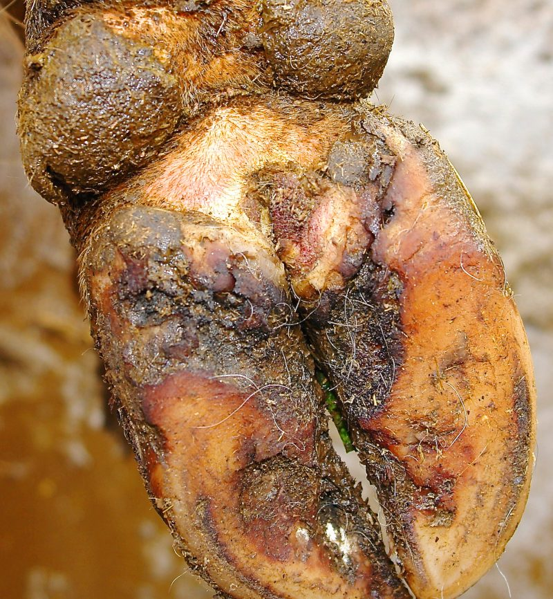 Érosion du talon